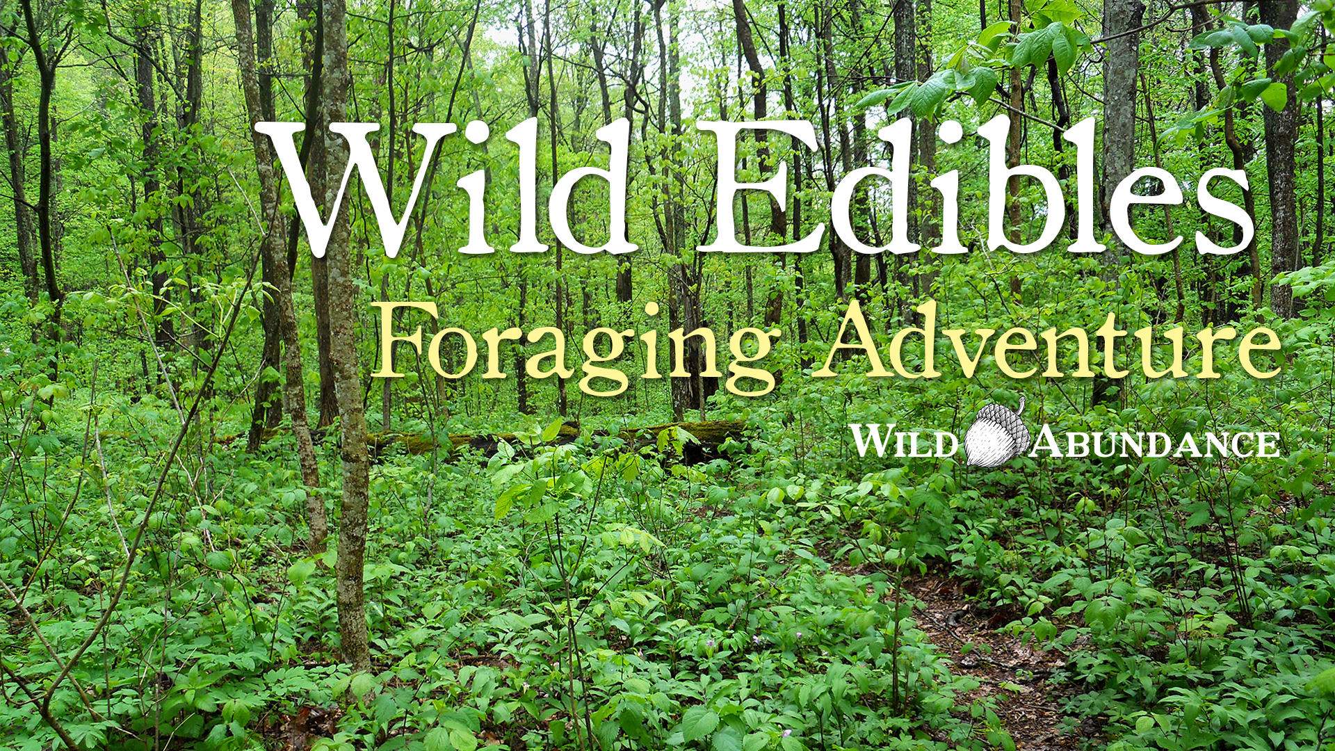 wild foraging class button