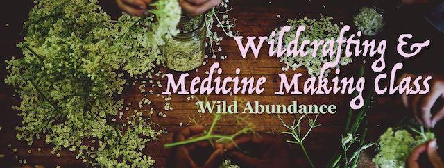 processing elder flowers for medicine