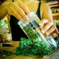 processing wildcrafted greens for medicine making