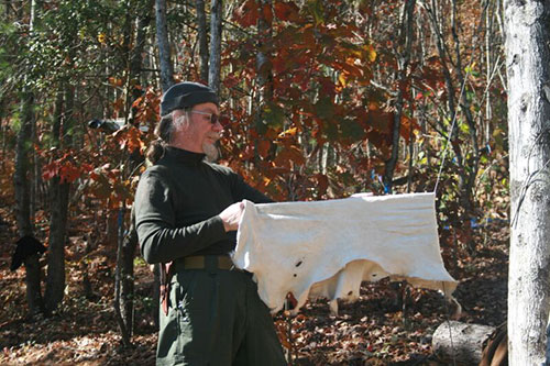 stretching a deer hide for brain tanning