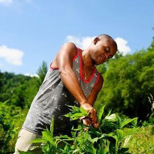 spring gardening apprentice harvesting plants