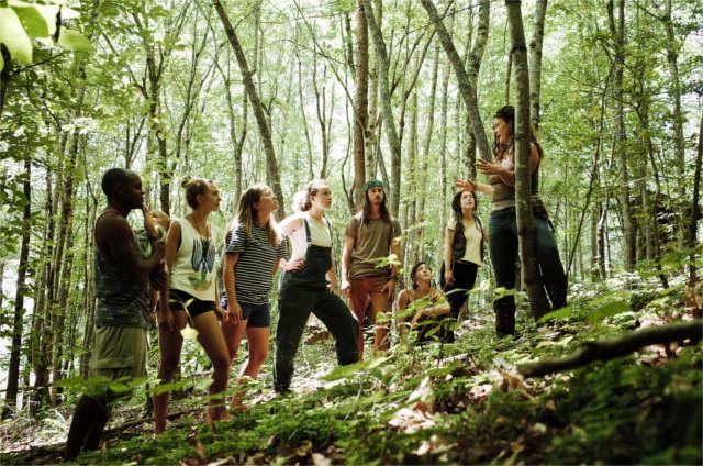herbal apprentices wildcrafting