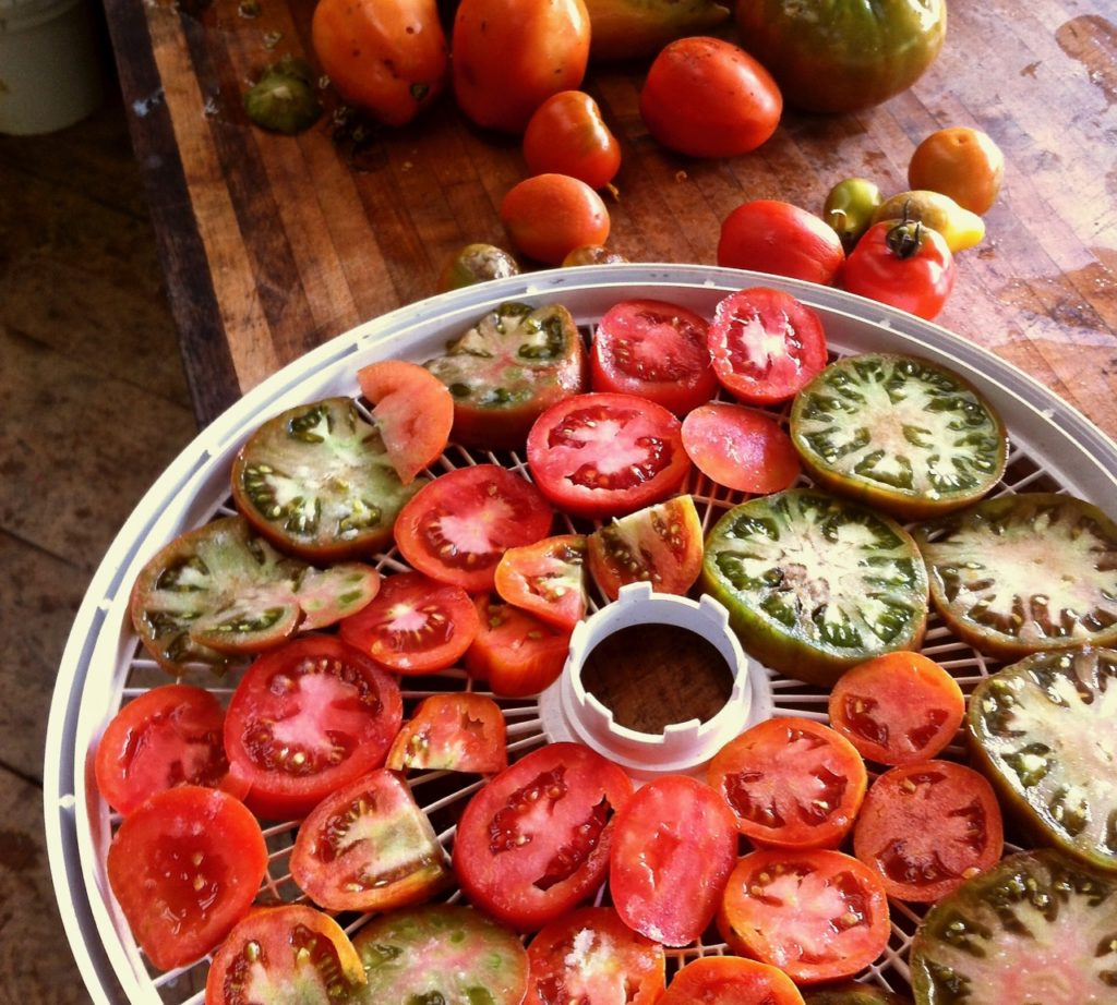 drying tomatoes to preserve the harvest