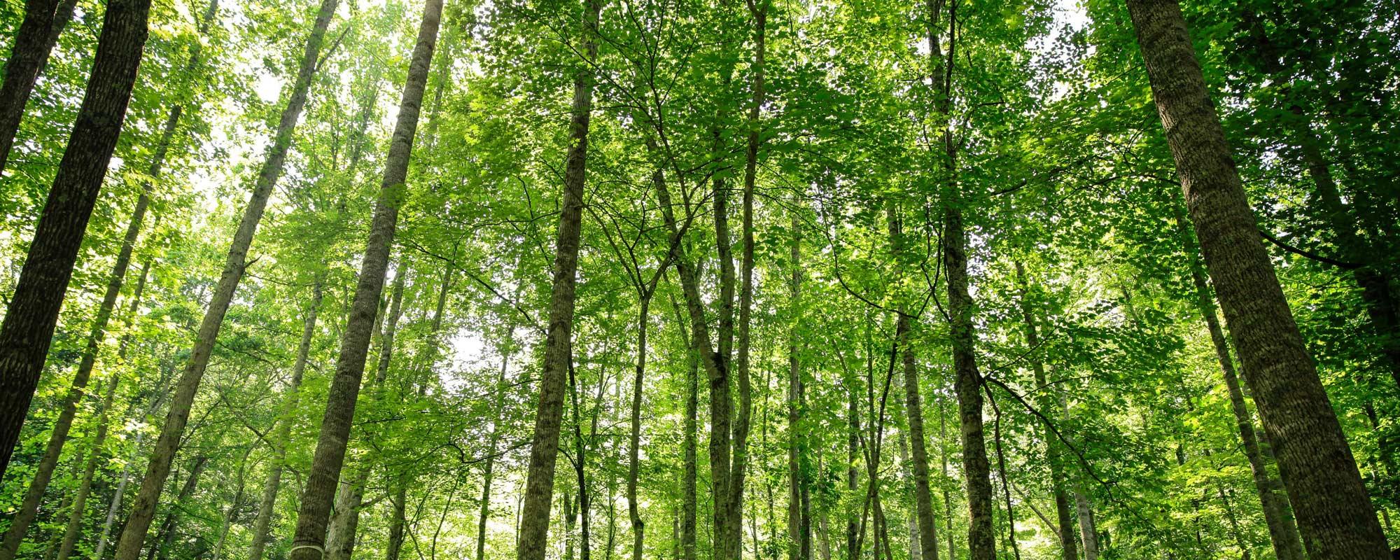 Forest at Wild Abundance