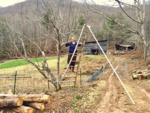 How to prune a fruit tree from an orchard ladder