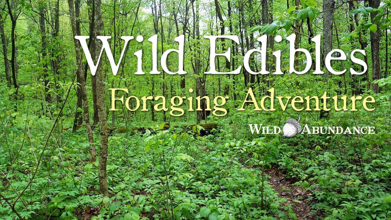 banner ad for wild edibles foraging adventure with Wild Abundance photo of verdant forest