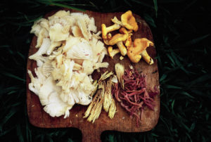 Wild Mushrooms collected in North Carolina cut up on a cutting board