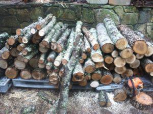 logs for growing mushrooms