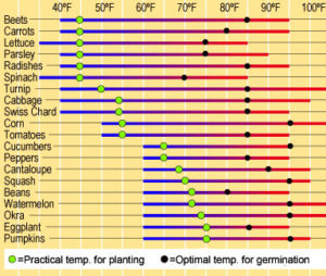direct sowing requires warm soil temperatures