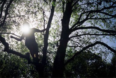 person in tree with sunlight