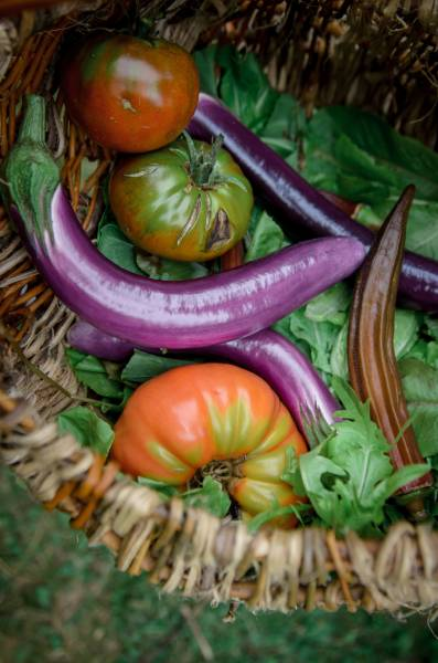 tomatoes eggplant and greens in basket