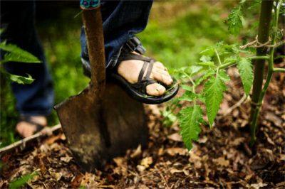permaculture apprentice digging in garden