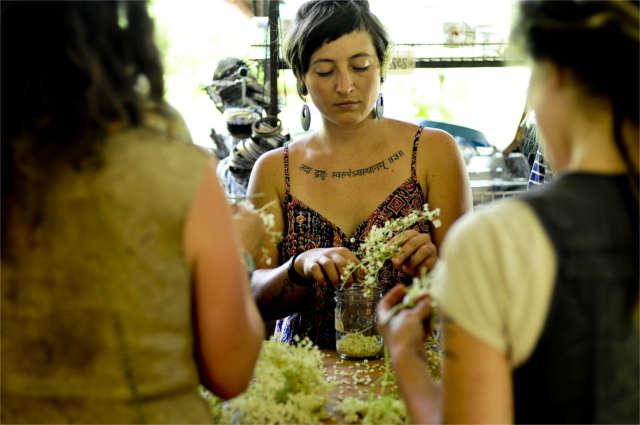 herbal apprentices processing elder flowers