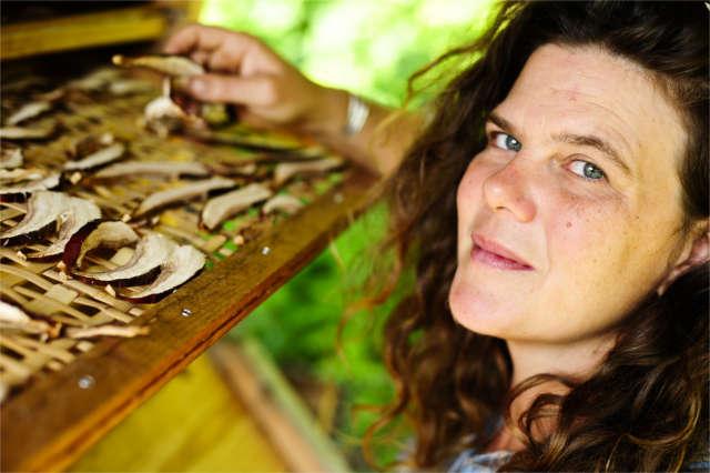 solar dehydrator reishi mushrooms