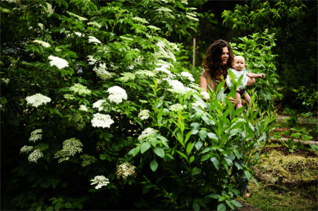 permaculture teacher with child foraging elder flowers