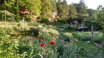 sustainable permaculture homestead garden
