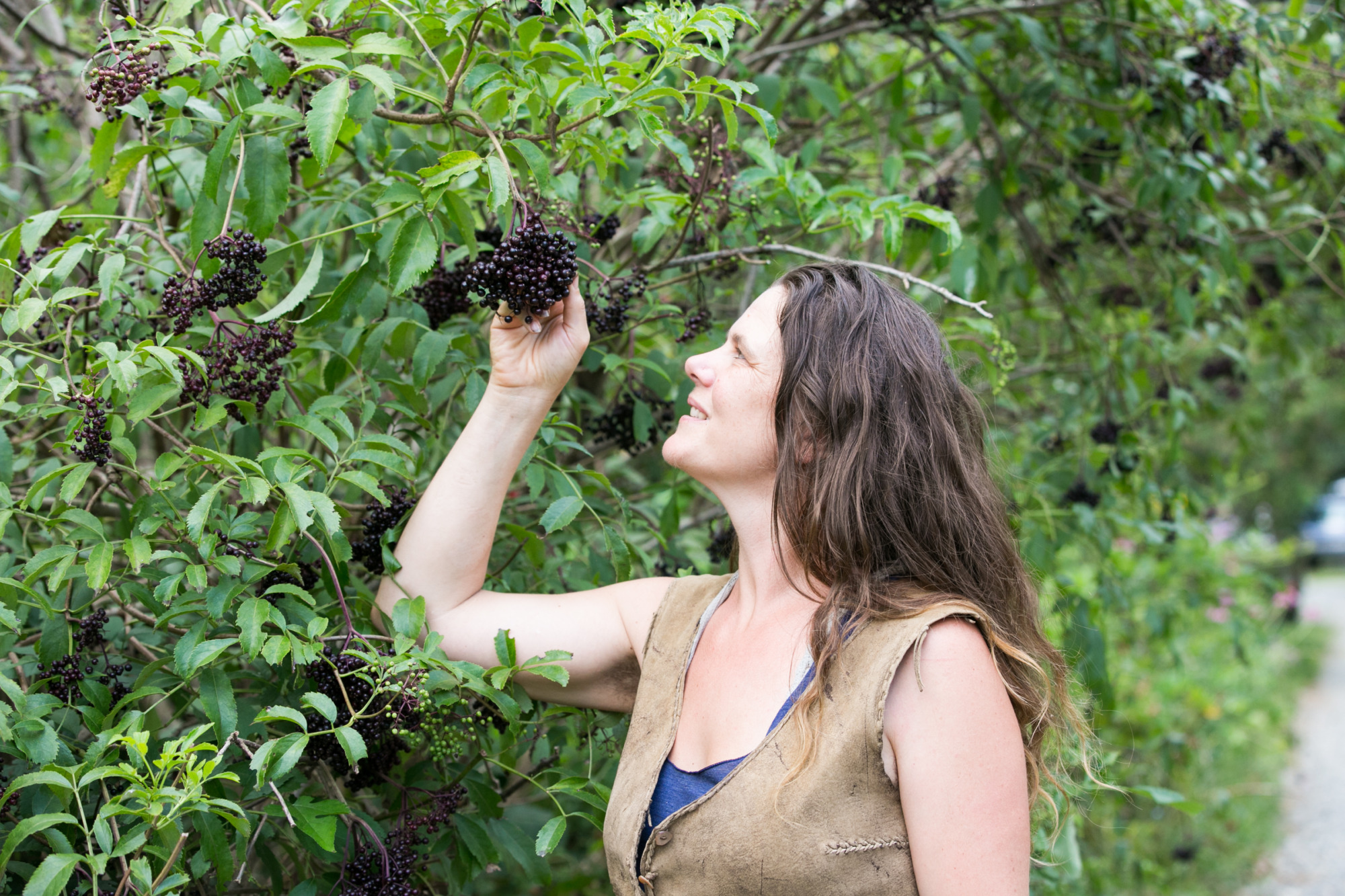 permaculture teacher harvesting elderberries