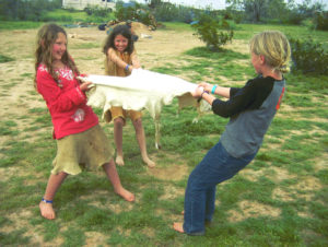 kids stretching a deer hide to soften it for hide tanning