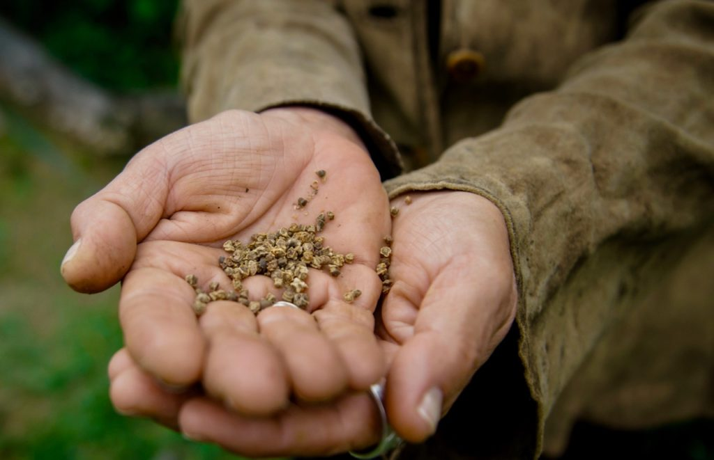 gardener holding seeds