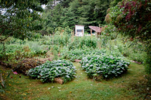 diverse permaculture garden with annual and perennial crops