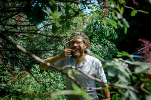 perennial elderberry bush with man harvesting berries