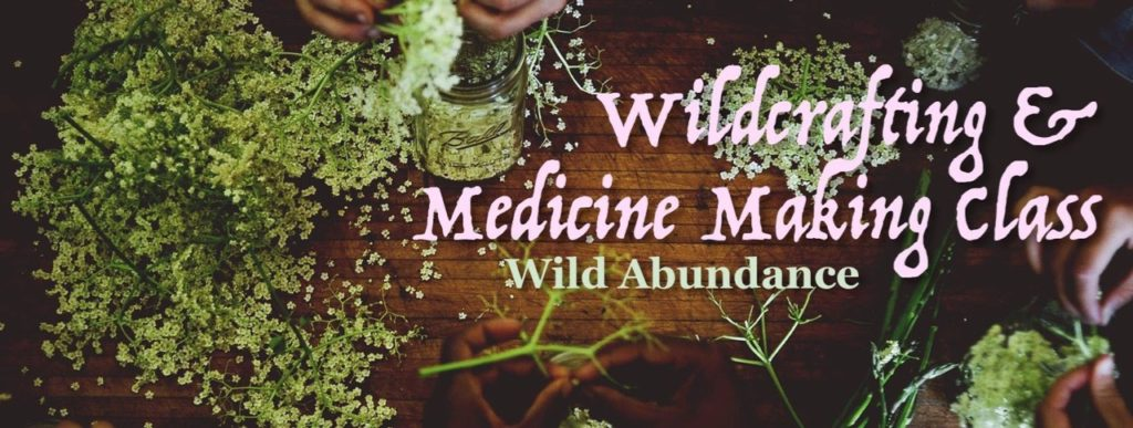 wildcrafting and medicine making herbalist course banner
