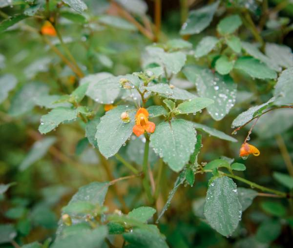 foraging plants near asheville nc