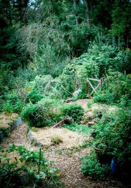 permaculture garden near asheville nc