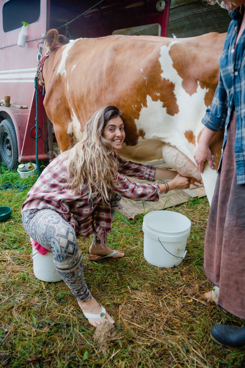 woman milking a cow helping a neighbor
