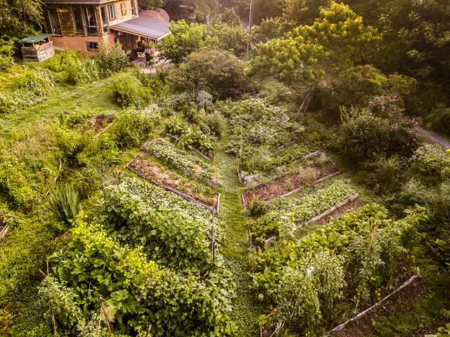 aerial photo of leaf shaped permaculture garden