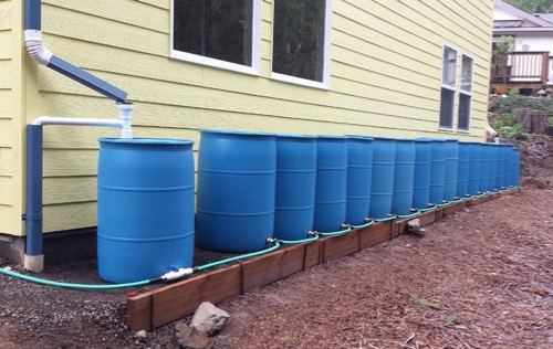 multiple blue rain barrels connected to a rainwater catchment system for irrigation