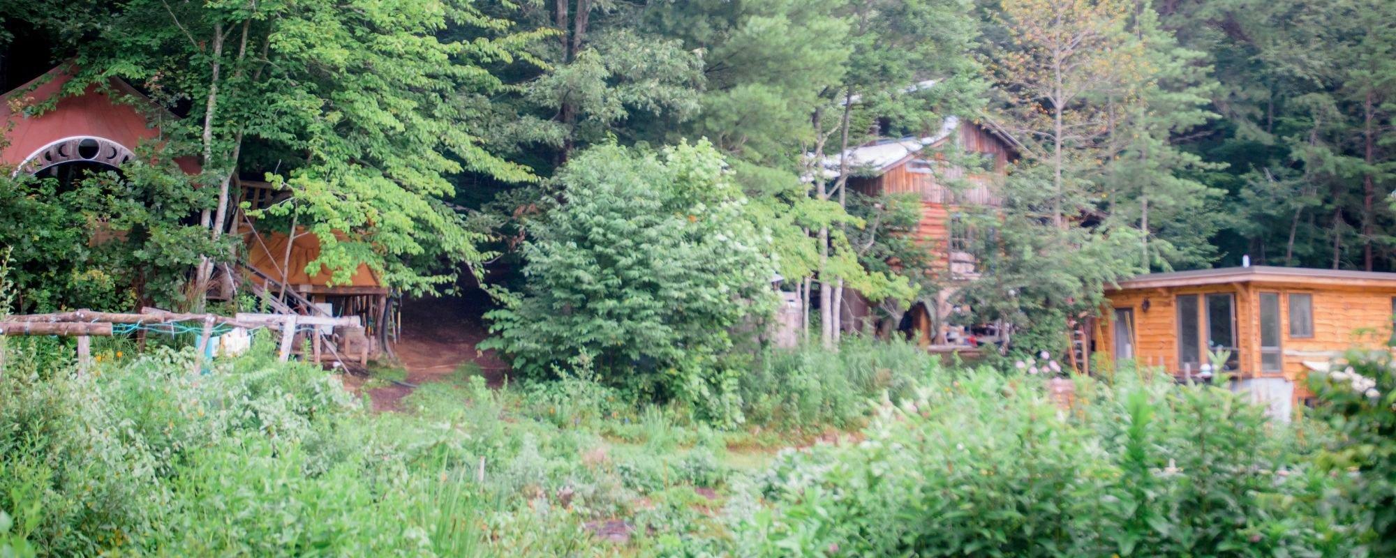 permaculture garden wild abundance homestead campus