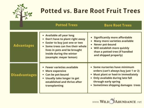 chart comparing advantages and disadvantages of bare root vs. potted fruit trees