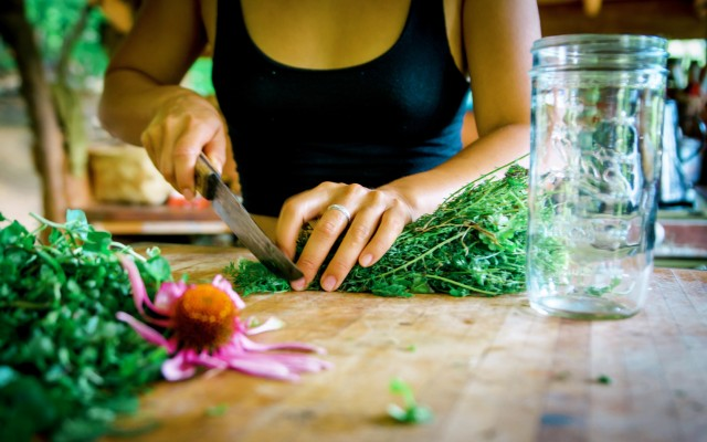 chopping up thyme and echinacea in herbal medicine workshop