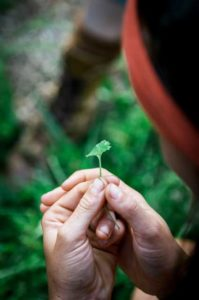 hands holding a tiny leaf