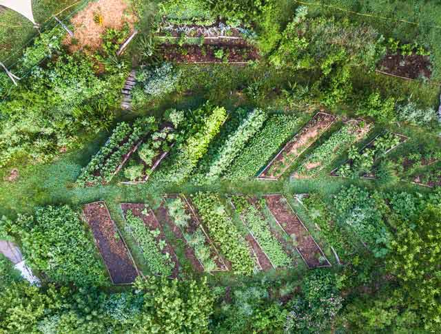 aerial view of leaf shaped permaculture garden at Wild Abundance