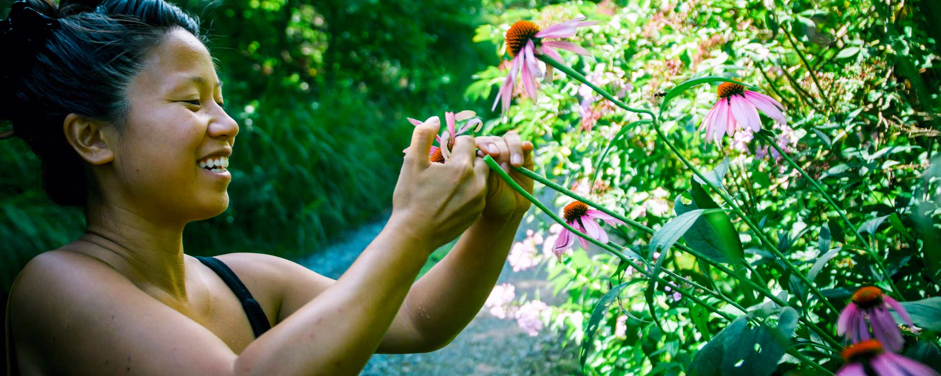 woman harvesting echinacea flowers in a permaculture garden