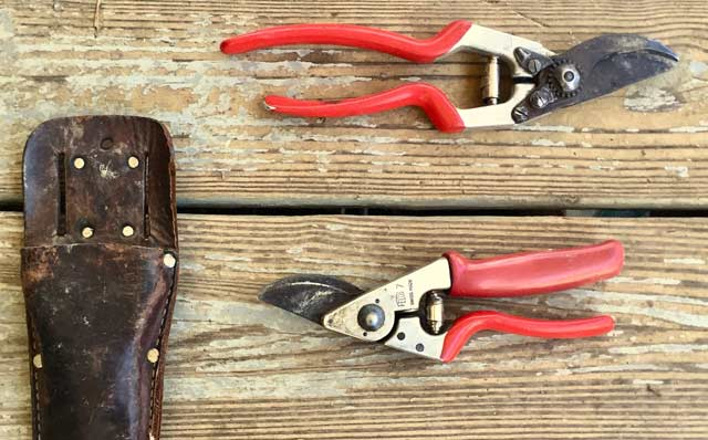 closeup of Felco pruning shears