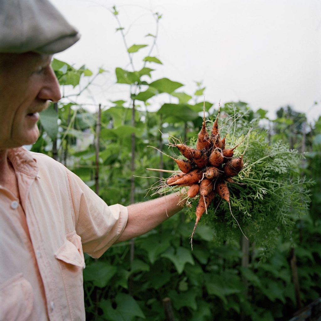 man holding a bunch of carrots