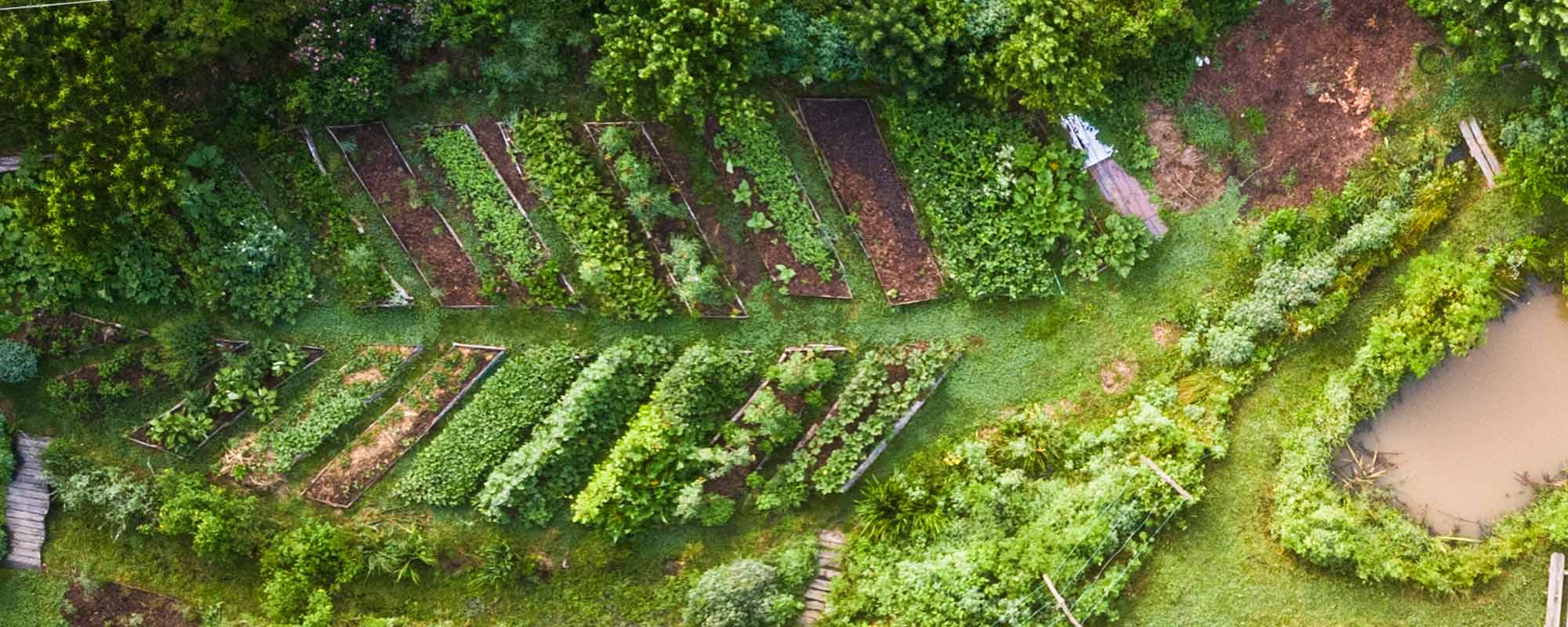 aerial view of leaf shaped garden