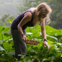 Top 10 Vegetables to Plant That Will Really Feed You