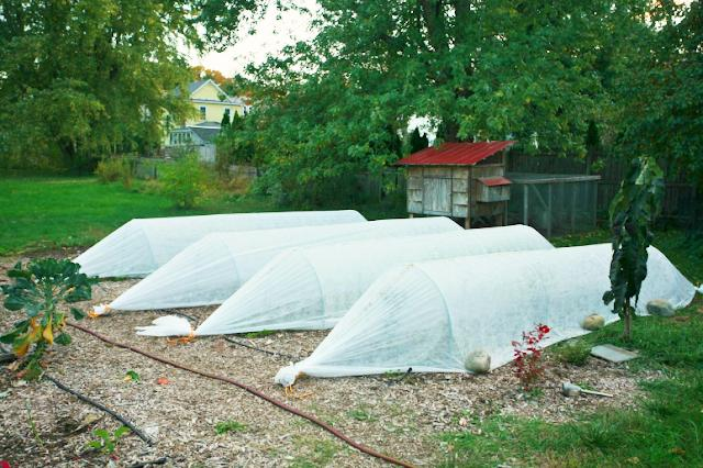Row cover over beds in a fall garden