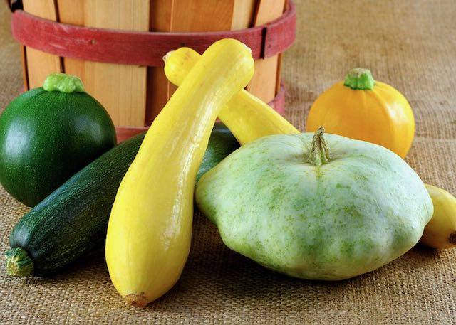 zucchini and other kinds of summer squash