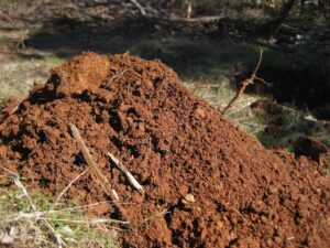soil piled up from planting a tree