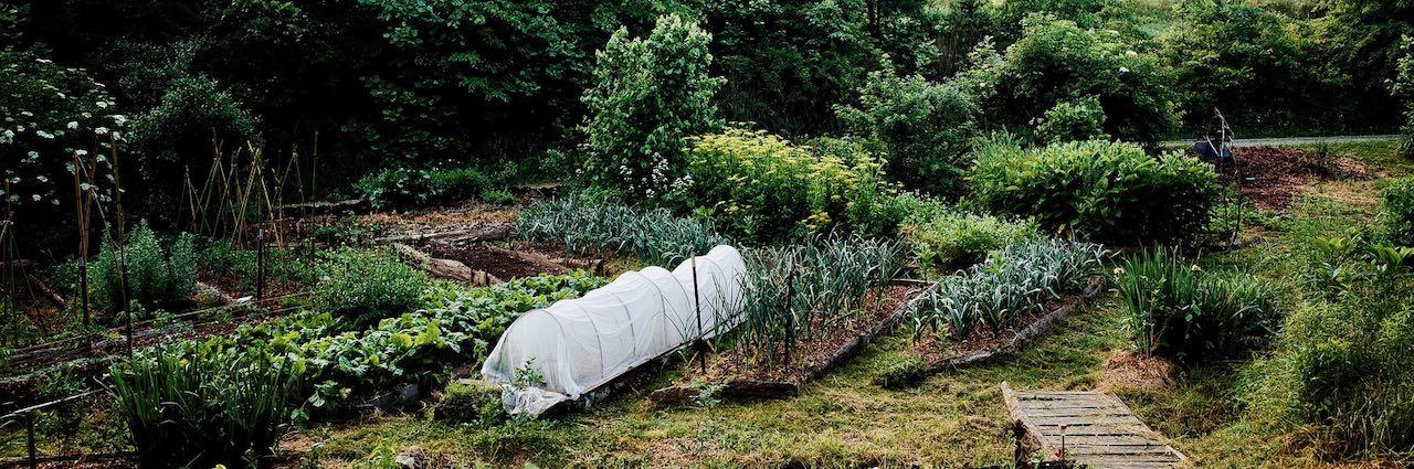 garden beds in june
