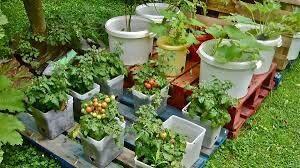 Container garden full of vegetables