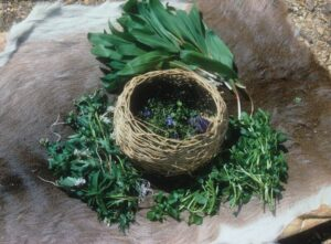 basket of foraged wild foods