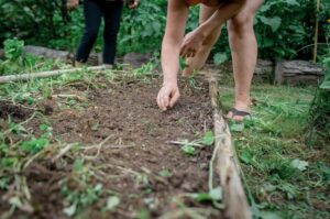 direct sowing seeds for fall gardening