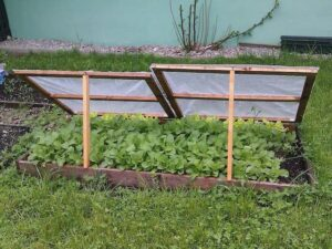 cold frame for fall gardening