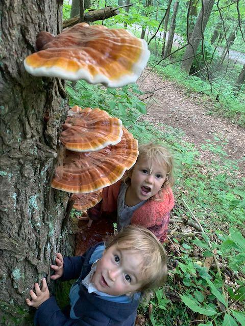children looking at reishi mushrooms on a hemlock tree